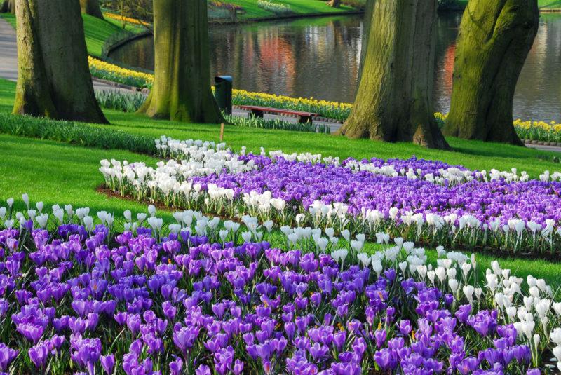 Посадка луковичных цветов в саду