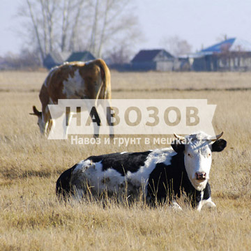 Жидкий компост из коровьего навоза